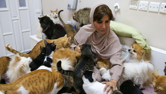 Omán | La conmovedora historia de la mujer que cría a más de 450 gatos y 12  perros | nczg | MUNDO | PERU21