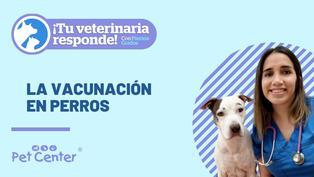 La vacunación en perros