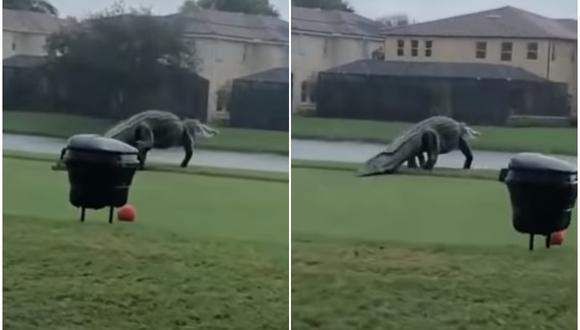 Un enorme cocodrilo sorprendió a varios golfistas en un campo ubicado en Naples, Florida (Estados Unidos). (Foto:  NBC2 News / YouTube)