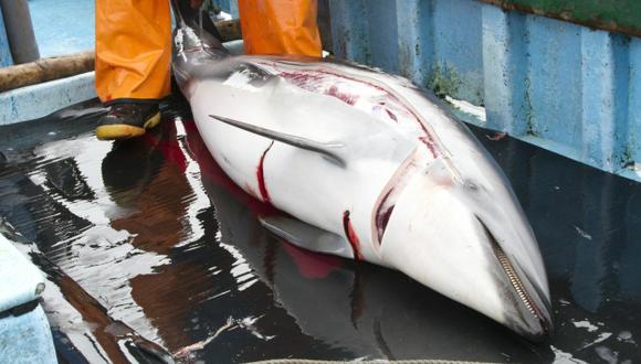 BRUTAL MATANZA. Fotografías revelan la crueldad con que los pescadores matan a los delfines. (Difusión)