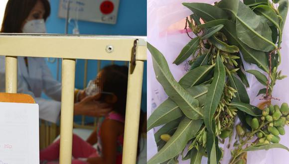 Tres menores de edad resultaron intoxicados tras ingerir los frutos de una planta conocida como 'hierba santa'. (Foto: Instituto Nacional de Salud del Niño de Breña)