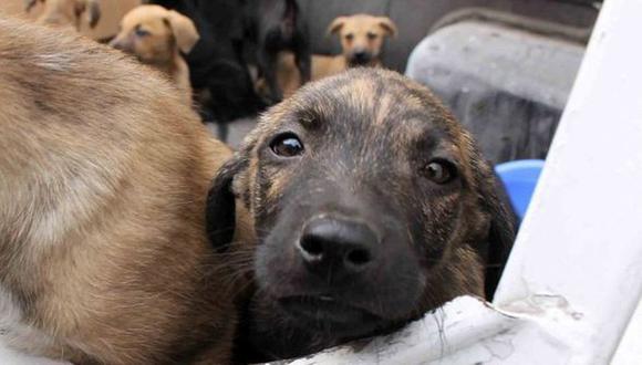 La ordenanza municipal tiene como fin regular la crianza, adiestramiento, comercialización, tenencia y su transferencia en la jurisdicción de los animales domésticos. (Foto: GEC)