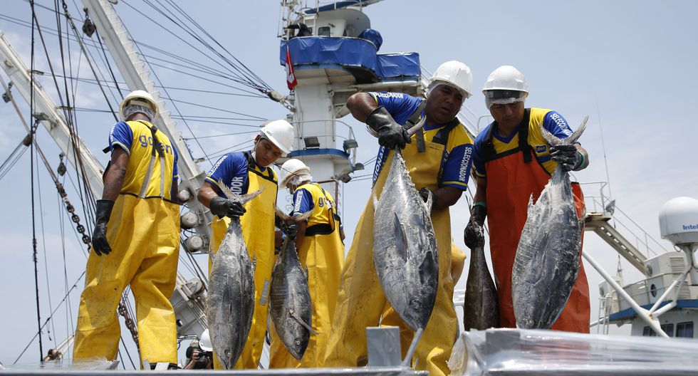 """La presidenta del gremio de pesquería indicó que """"los que podemos salir a operar somos tanto la flota de cero como la flota de madera"""". (Foto: GEC)"""