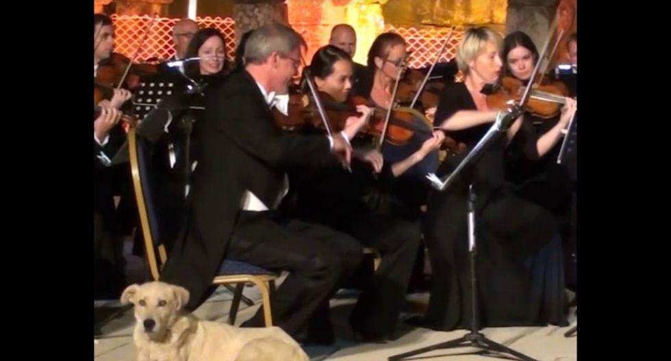 Un perro melómano se vuelve sensación en las redes sociales. ¿Qué ocurrió? El can ingresó a un concierto al aire libre de la Orquesta de la Cámara de Viena en Turquía e interrumpió su presentación. (Captura)