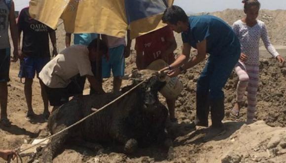 Pancho Cavero llegó hasta Punta Hermosa, donde encontró animales en mal estado.