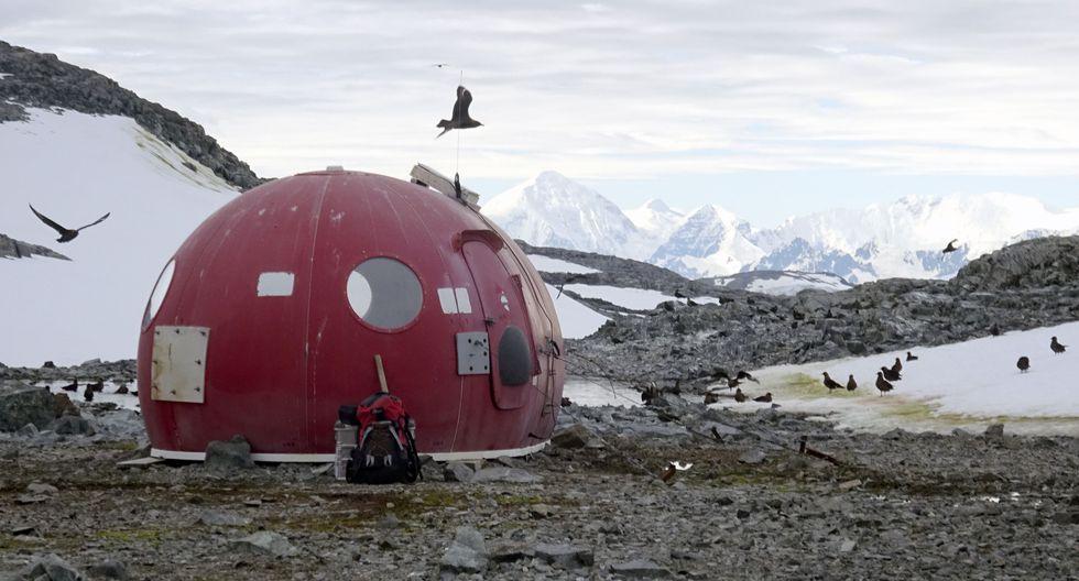 La Antártida se torna verde debido al cambio climático. (AFP)