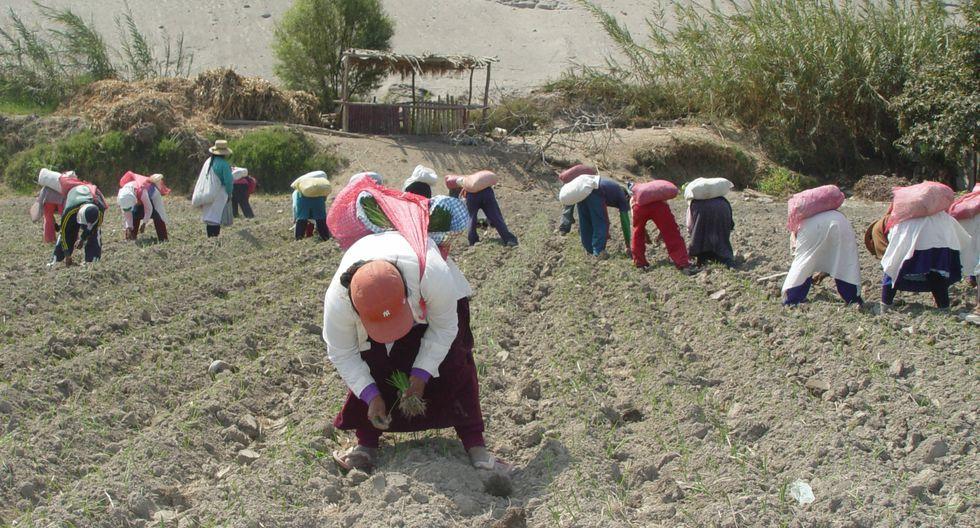 La medida busca apoyar a los agricultores rurales. (Foto: GEC)