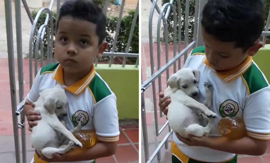 Un niño se robó los corazones de todos en las redes sociales por su infinito amor hacia los animales. (Foto: Alexandra Anaya en Facebook)