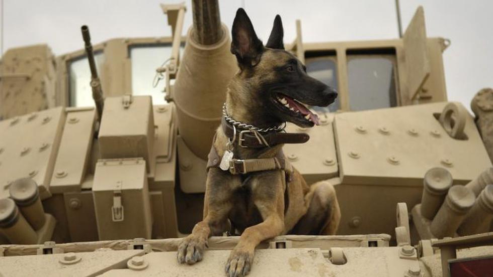 Perros de guerra. (Reuters)