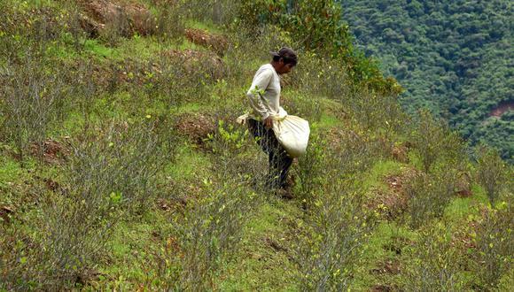 El precio de la droga en Perú se desploma por efecto del coronavirus. (Foto: AFP)