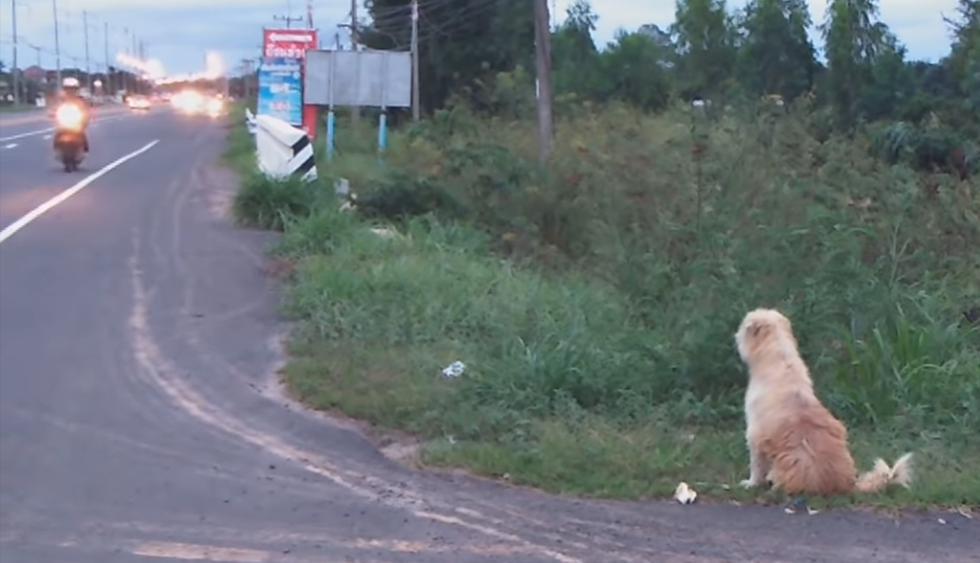 Un perro se reencontró con sus dueños tras esperar cuatro años al lado de una carretera. La historia es viral en redes sociales. (Facebook)