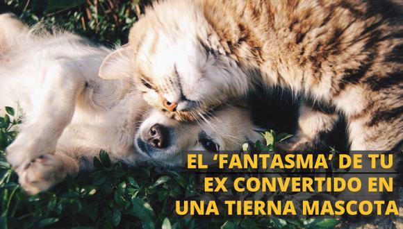 ¿Le podrías el nombre de tu ex a tu mascota? Así fomentan la adopción de animales en Brasil. (Perú21)