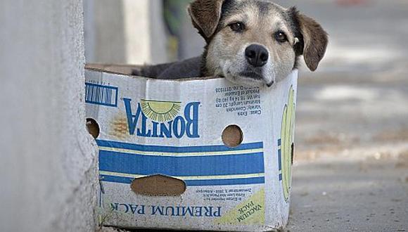 Refugio animal inicia campaña que busca adoptantes o padrinos de mascotas en abandono. (Foto: archivo El Comercio)