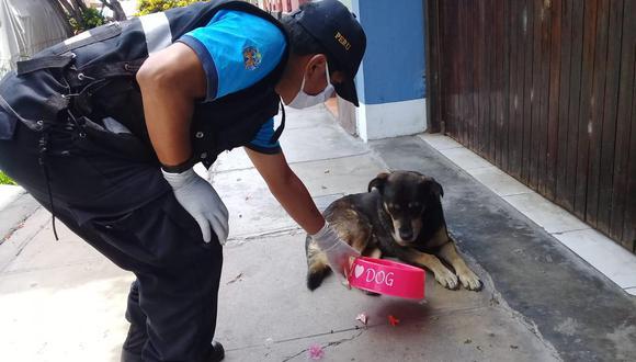 Agentes de serenazgo de la Municipalidad de Magdalena del Mar entregaron comida a los perros abandonados. (Foto: Municipalidad Magdalena del Mar)