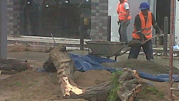 'Arboricidio'. San Isidro denunciará a responsables de la tala. (Difusión)