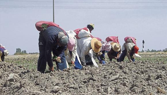Usarán granos de calidad. (Perú21)