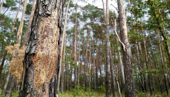 En la selva se quema un promedio de 150 mil hectáreas al año y eso es una pérdida de madera valorizada en US$ 4 mil millones, según Adex.  (FOTO: AFP)
