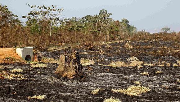 América Latina produce el 14% de la madera mundial. (Reuters)