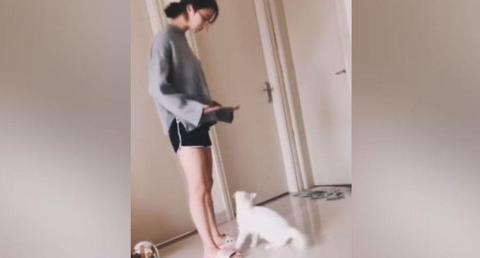 La mujer le hizo señas a su mascota para que se acercara. (Facebook: @Newsflare)