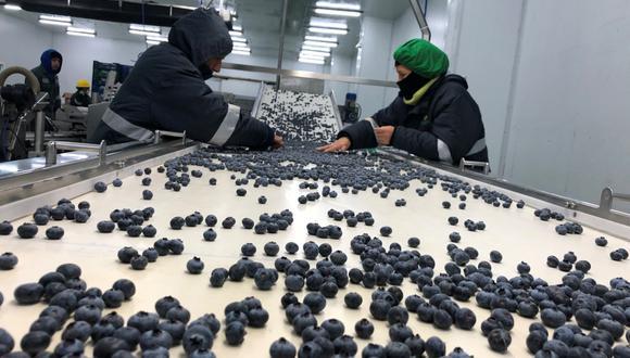 Los arándanos están entre los productos que podrían verse afectados si no se llegara a controlar la epidemia en China. (GEC)