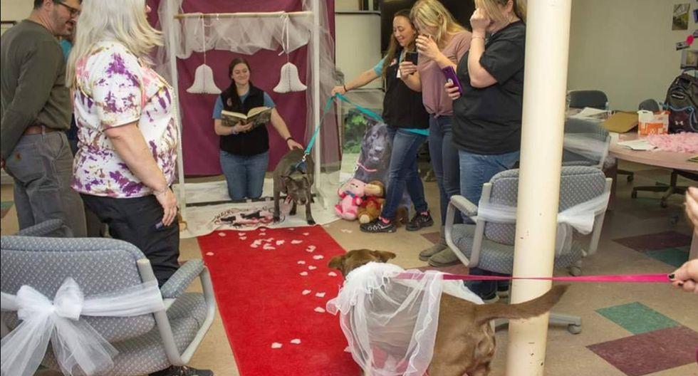 Incluso hicieron que la perrita caminara hacia el altar, donde el can, que iba a estar con ella para toda la vida, ya se encontraba esperándola. (Facebook: @KennebecValleyHumaneSociety)