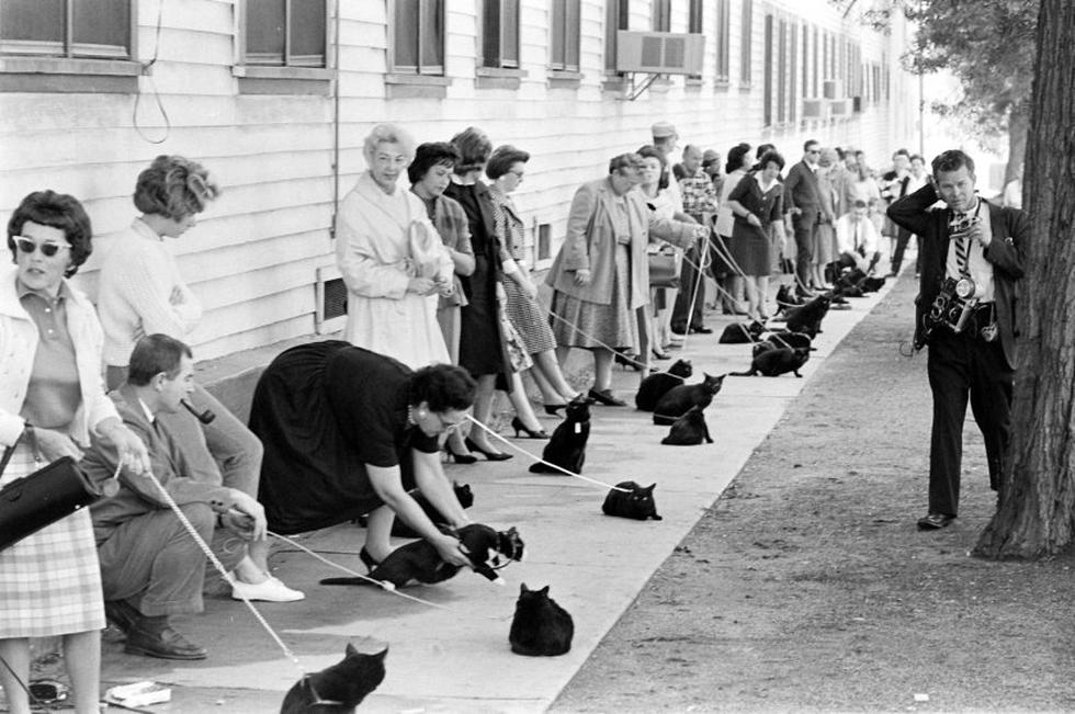 "Owners with their black cats, waiting in line for audition in movie ""Tales of Terror."" (LIFE / Getty Images)"