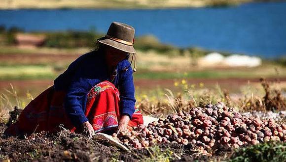 a actividad agrícola en el Perú se ha potenciado con la exportación de uva, mango, cítricos, espárragos, palta, bananos, mandarinas y kion.