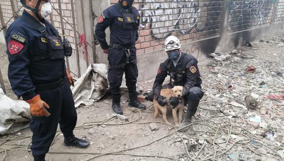 El can luego del rescate no quiso separarse del policía que lo salvó. (PNP)