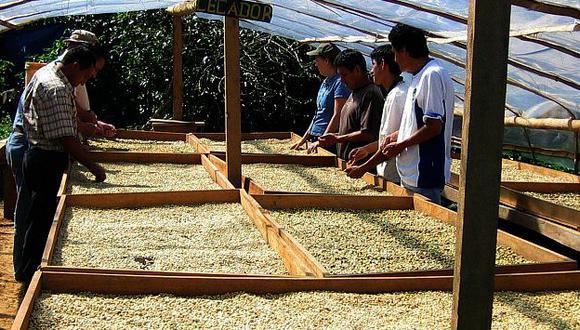 Cafetaleros piden mayor inversión en la promoción del grano natural. (Difusión)