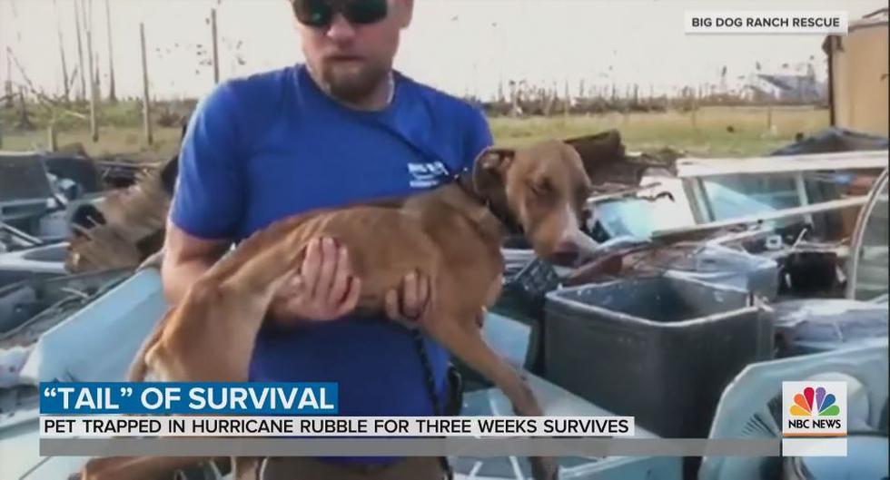 Este perro fue hallado debajo de los escombros de un edificio colapsado por el paso del huracán Dorian. (Foto: Captura de video)