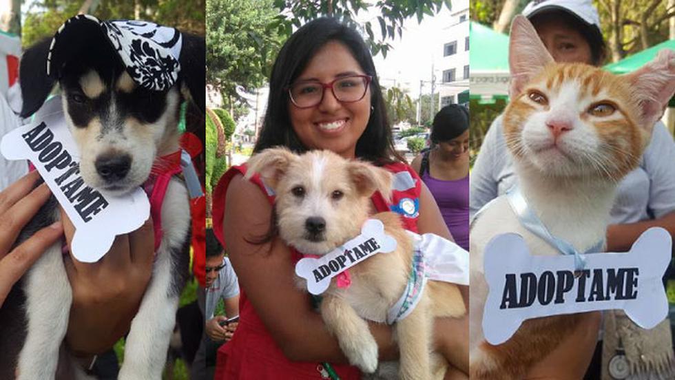 Municipalidad de Surco realiza campaña de adopción de mascotas rescatadas de los huaicos. (Foto: Municipalidad de Surco)