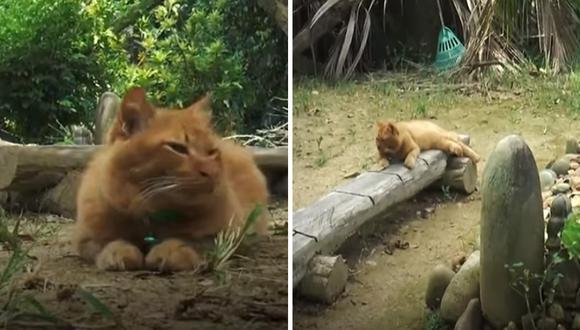 La gatita de nombre Nana acude todos los días a la tumba de su dueño. A veces lo hace junto a su familia, y otras veces va sola. | Foto: RT/YouTube