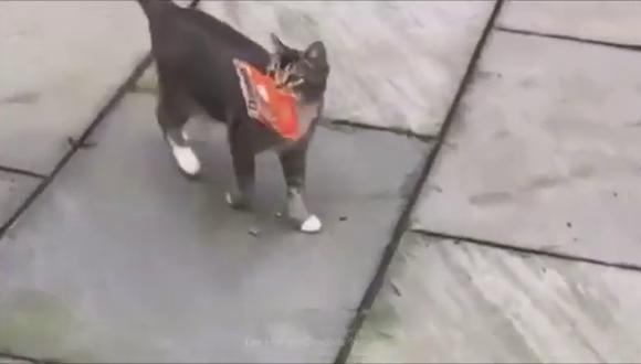 El felino trajo dulces para sus amos. (Foto:  DeadlinenewsTV | YouTube)