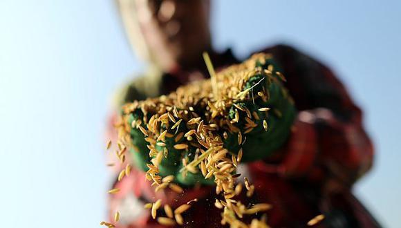El Niño amenaza con volver y golpear producción mundial de alimentos, como el arroz. (Bloomberg)