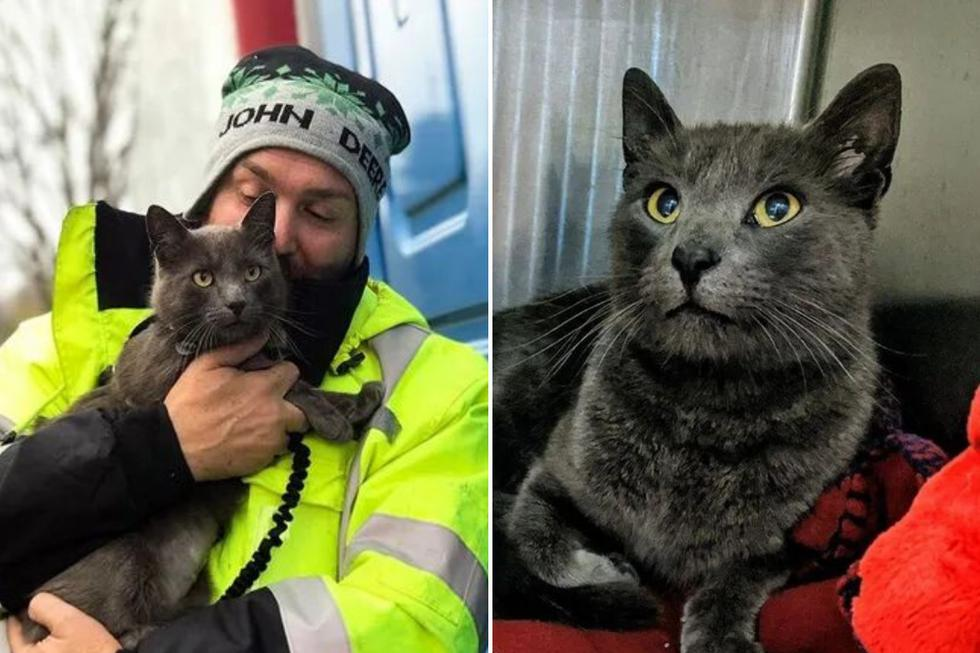 Matthew y su gato 'Ashes' recorren Estados Unidos a bordo de su camión hasta que un día sus caminos se separaron por accidente. (Foto: lollypop.org)