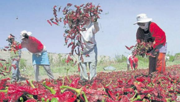 Ministro de Agricultura: Medidas permitirán que el sector agrícola se reactive según titular del Minagri. (USI)
