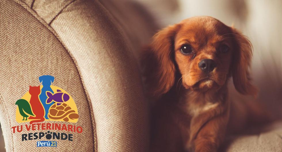 Un perro quedó tan impresionado por su belleza que no pudo mover ni un solo músculo. (Foto: Pixabay/Referencial)