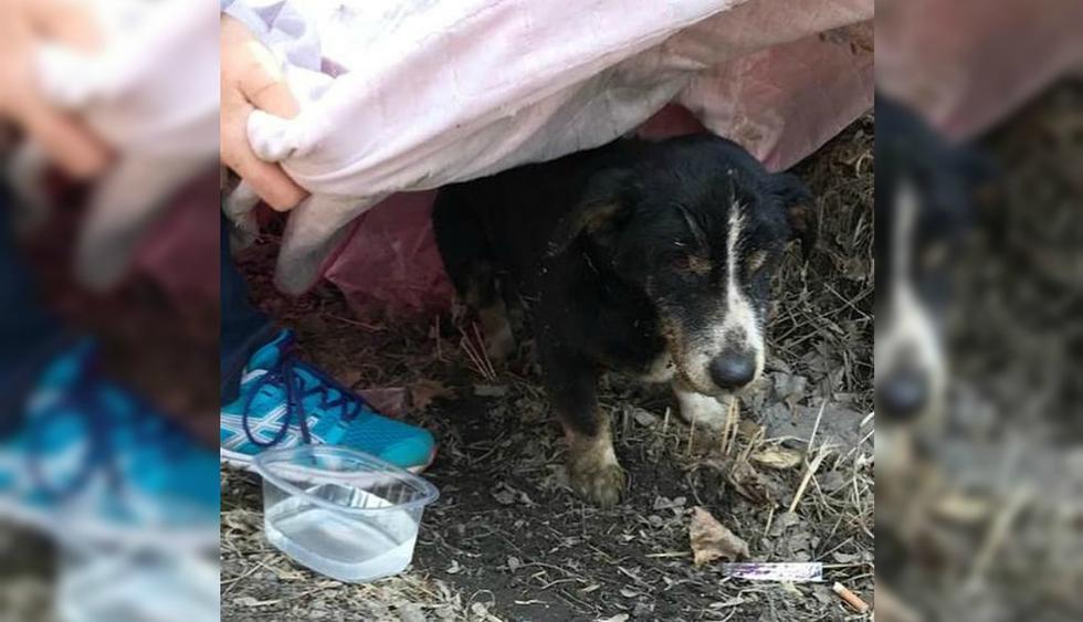 Se viralizó en YouTube la insólita historia de Dik, el perro que 'revivió' y que se reencontró con sus dueñas. (Foto: Irina Mudrova)