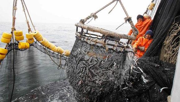 Gremios esperan que Sanipes se convierta en un promotor del sector pesquero como en otros países, donde ayuda a conquistar mercados.