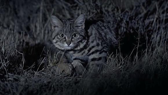 El nombre que portan hace alusión al color de sus patas inferiores que son de color negro. (Foto: Nature on PBS / YouTube)