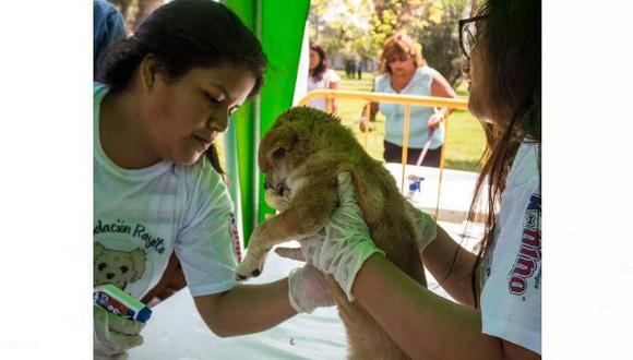 Esta actividad contará con la presencia de veterinarios experimentados que brindarán los servicios de desparasitación y aplicación antipulgas. (Foto: Facebook/ Fundación Rayito)