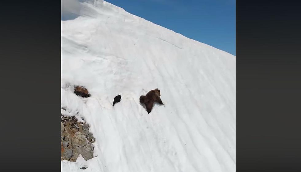 Mamá osa y su pequeño salieron de su guarida y tuvieron dificultades para caminar sobre la nieve. (Foto: captura Facebook)