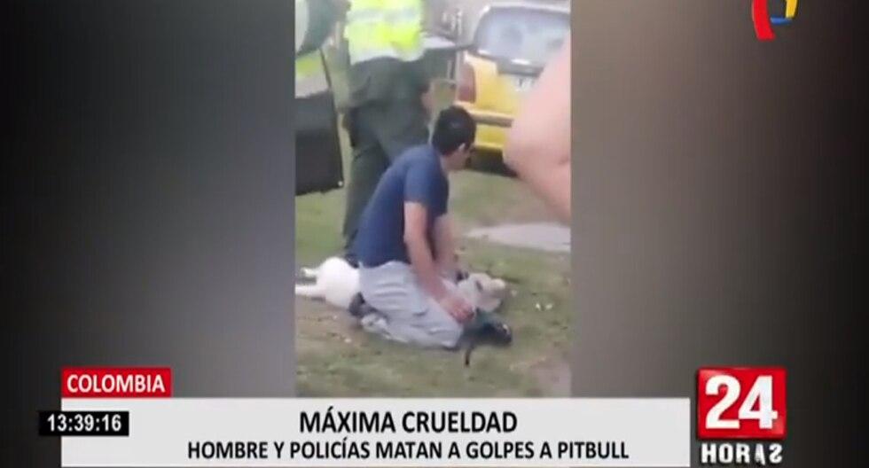 Pitbull muere asfixiado por su propio dueño. (Foto: Captura Panamericana)