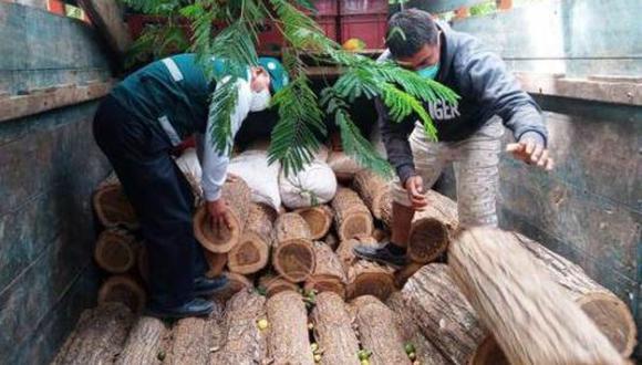 Piura: Serfor decomisó 85 trozas de madera camuflada entre sacos de maíz y cerveza