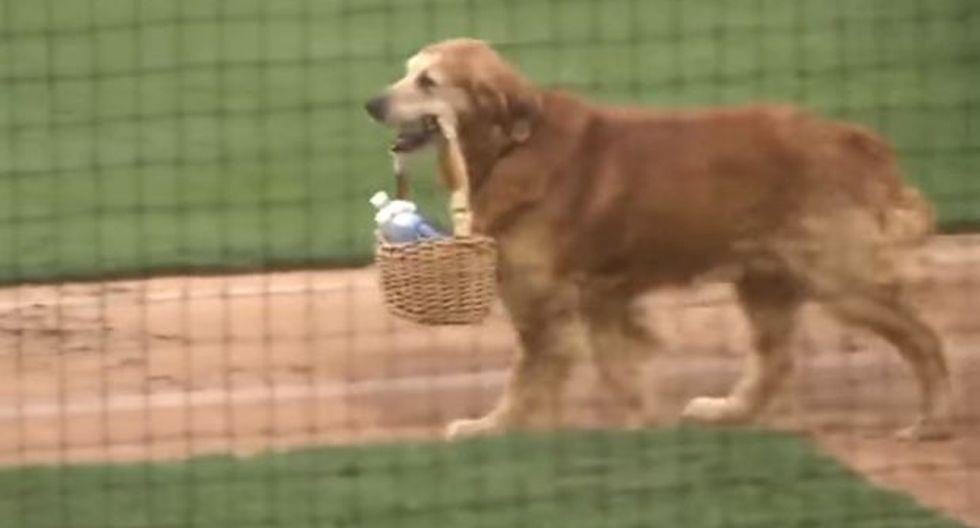 """Jake ha sido bautizado como """"el perro diamante"""" por apoyar a los Birmingham Barons de Alabama, un equipo de las ligas menores. (Foto: captura)"""