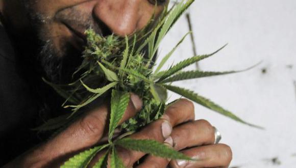 Marihuana en Uruguay estará bajo control estatal si aprueba proyecto en el Senado. (EFE)