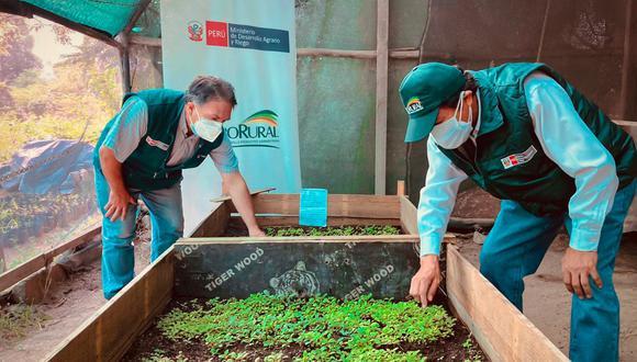 Midagri producirá 100 mil plantas de quina, nuestro árbol bandera (Foto: Midagri)