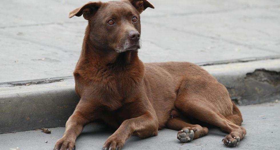 La ordenanza establece la creación del registro municipal para la tenencia de canes. (Foto: GEC)