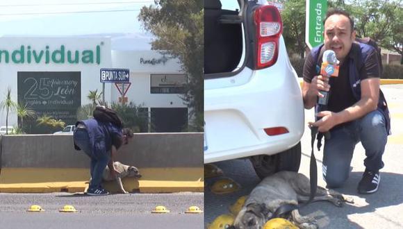 Reportero mexicano rescató a perrita abandonada en carretera. (Captura)