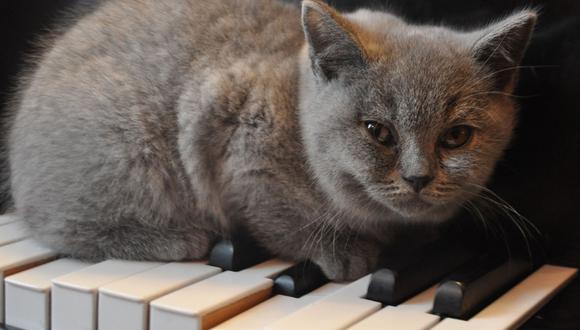 El adorable gato de una instructora de piano siempre hace de las suyas durante las lecciones. (Foto: Pixabay/Referencial)